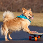 Skateboarding Dogs: Waffles the Skateboarding Dog